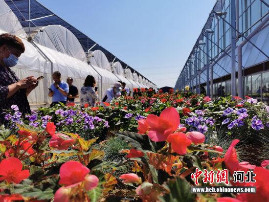 图为与会嘉宾参观溢彩花卉。 陈兰 摄
