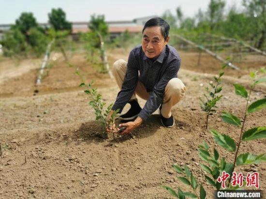 尚春林自己培育的树苗。 王鹏 摄