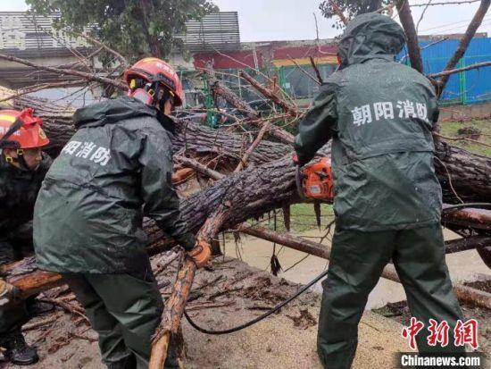 图为朝阳消防对现场枯树进行分解处置。 北京朝阳消防供图