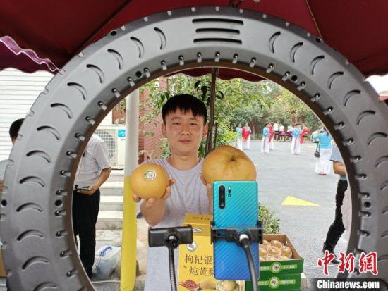 """馆陶县""""黄梨小镇"""",一位正在做黄梨推广直播的年轻人向记者展示丰收的黄梨。 王天译 摄"""