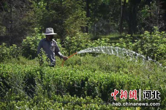 市政园林工作正在为绿地浇水。 齐红雨 摄