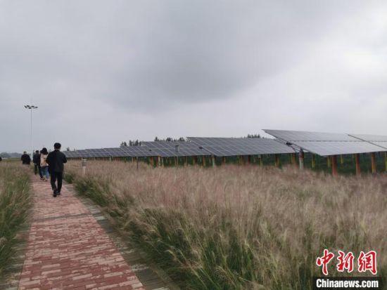 冀州区农光互补示范园一角。 王鹏 摄
