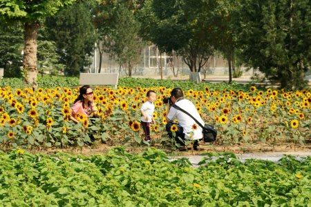 石家庄植物园盛装度国庆高清图片