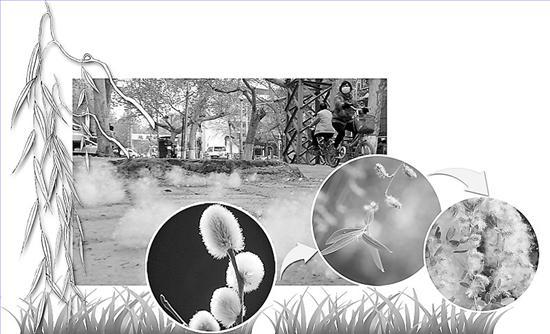 柳树生长过程图片大全