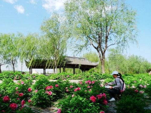 的景点 省会 石家庄植物园 5.1 可赏花 游园 飚飞车高清图片