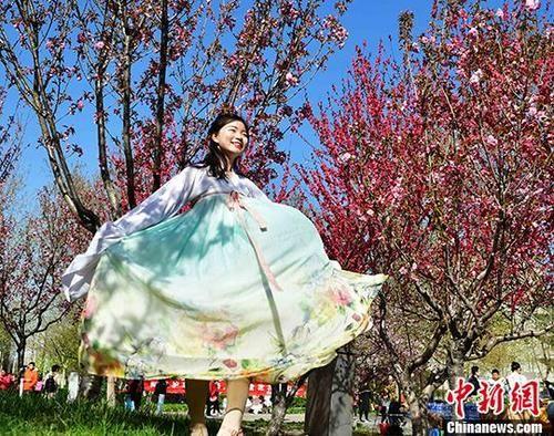 """河北一高校办""""樱花节"""" """"90后""""女大学生成赏花主力军"""