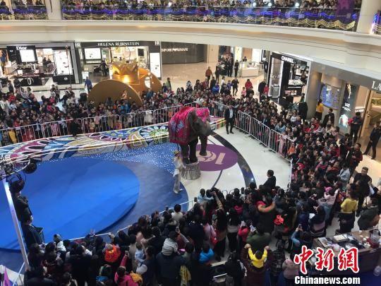 河北石家庄:逛商场遇到大象