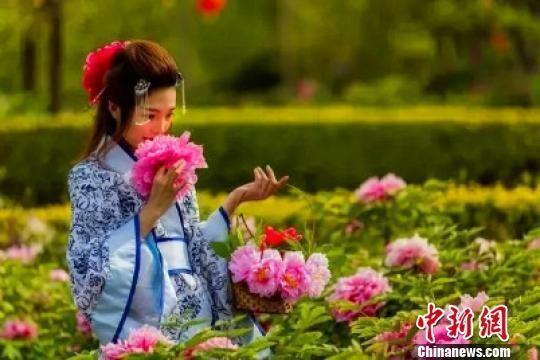 河北柏乡举办第七届中国汉牡丹文化节(图)