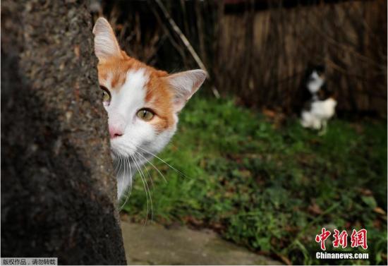 猫咪天堂伊斯坦布尔 大街小巷都是喵的身影