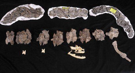 世界上最大的蛇骨头
