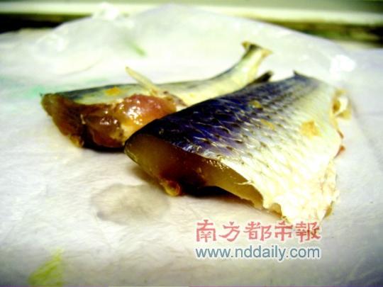杨婷/这块会发光的鱼肉乍看上去和平常的鱼肉没什么区别。本报记者杨...