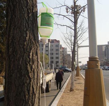 生长激素,有利于受损树木在新春万物生长之际得到更