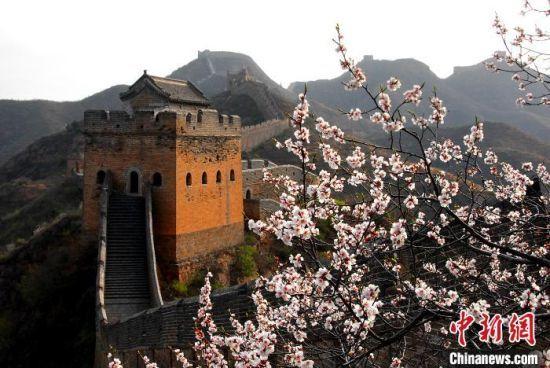 """四月一起""""�(yun)�p花"""" 看金山�X�L城(cheng)�f(wan)��杏花�(jing)迎春"""